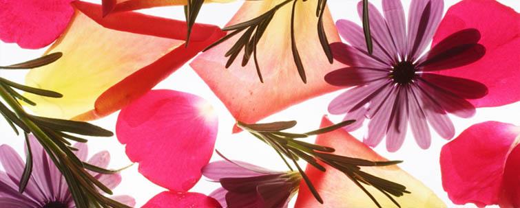 Hotel-Dorer Beauty Blüten